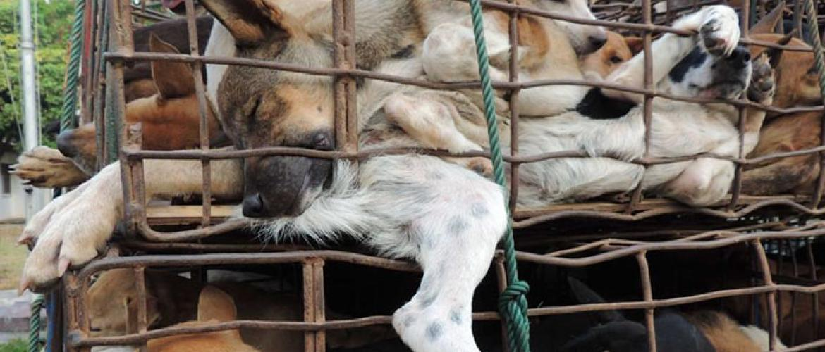 Taiwan bans Dog Meat