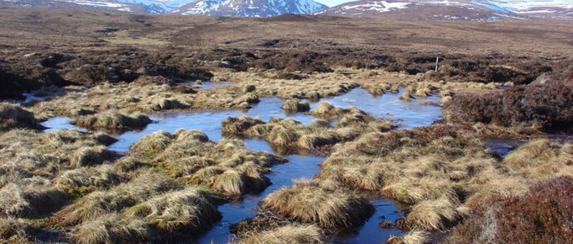 Urgent action on Peatlands