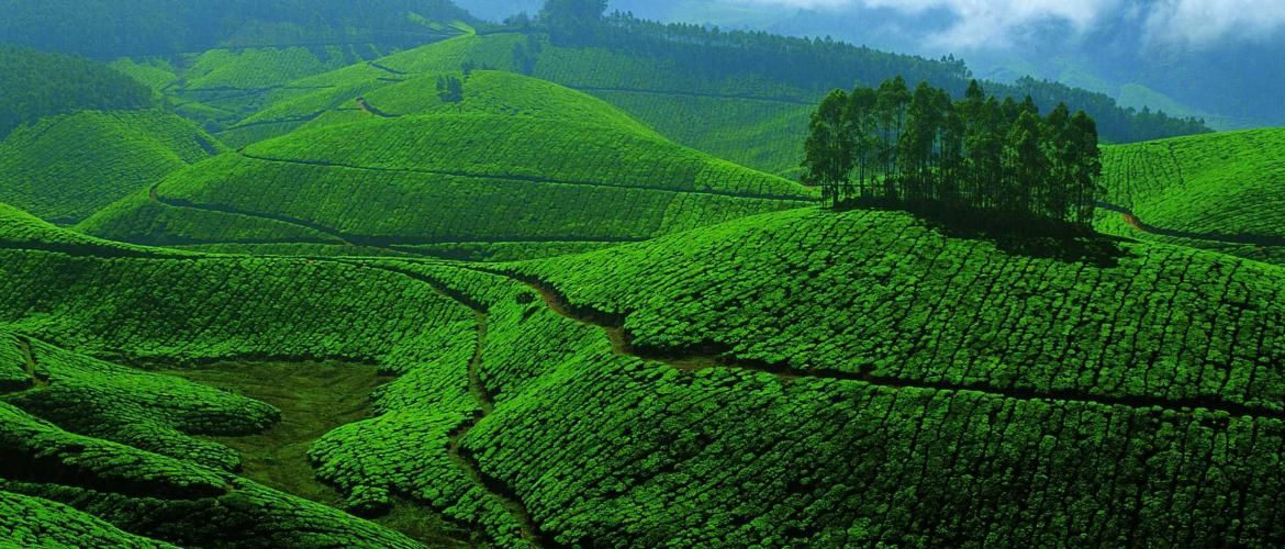 Kerala: Development for a green future