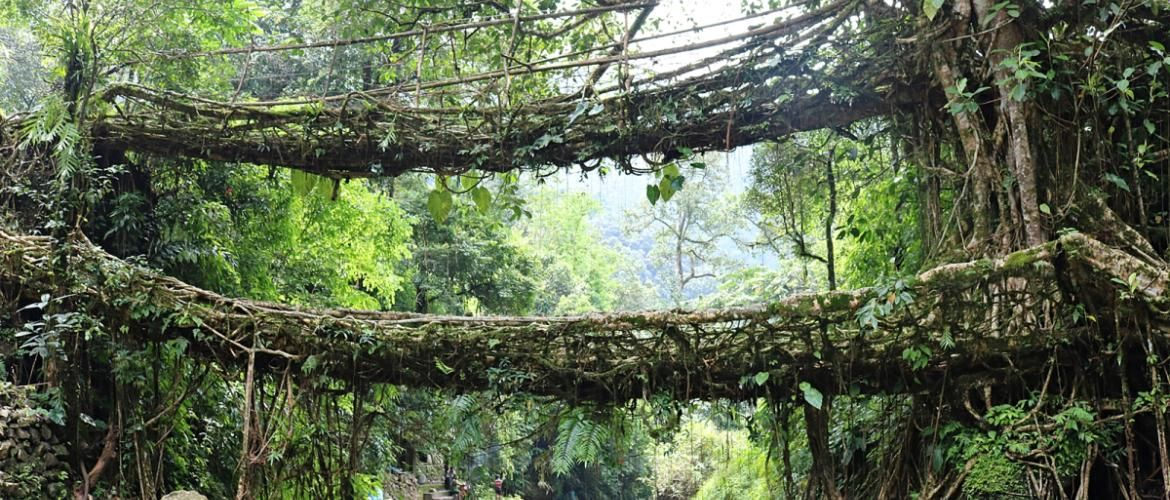 Meghalaya: Its raining opportunities!