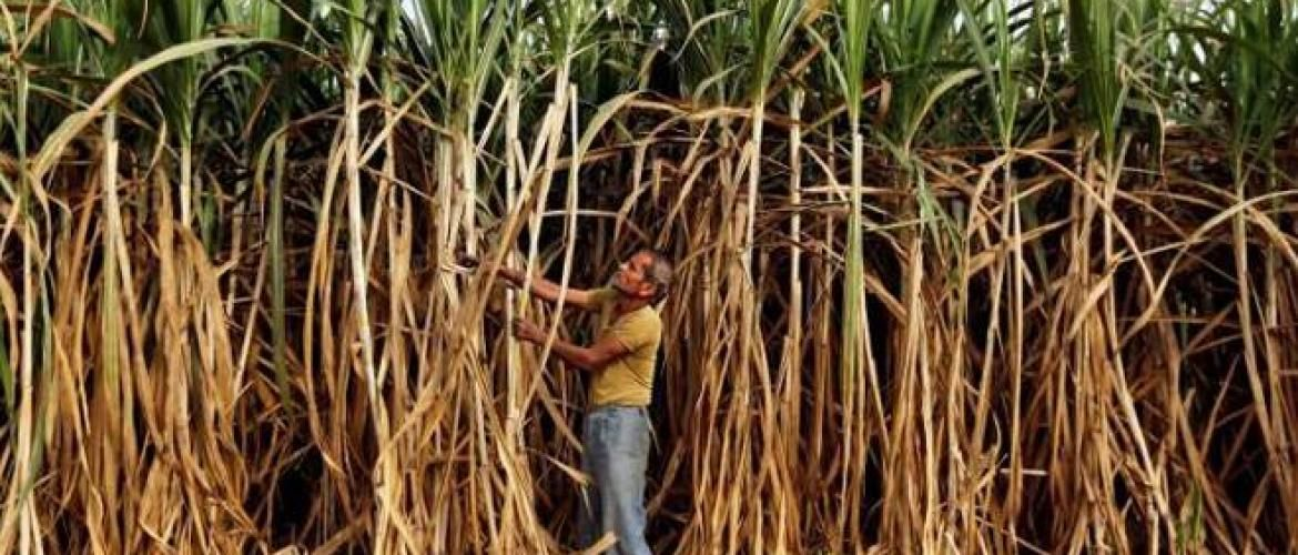 India to export raw sugar